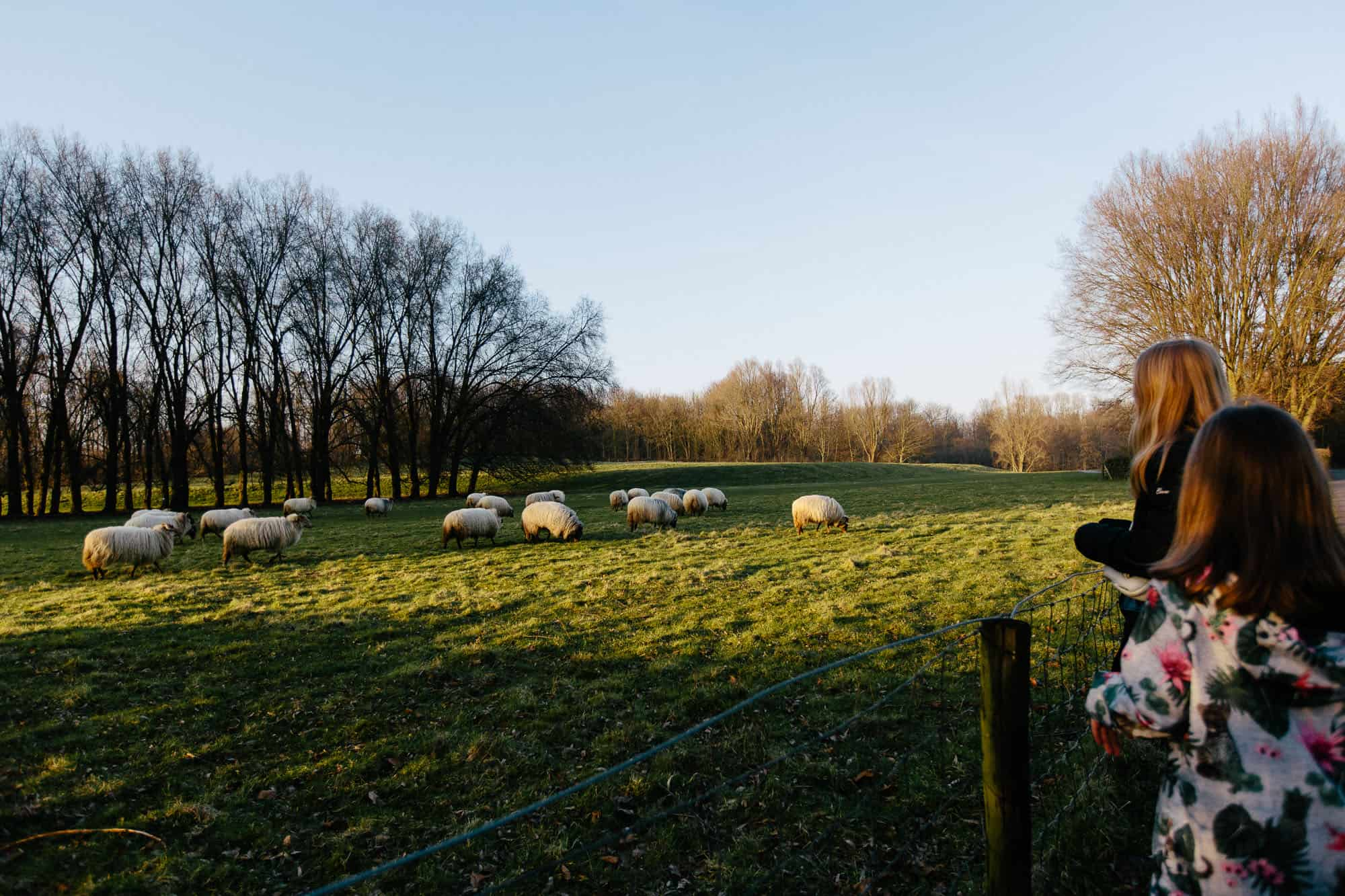 children watching sheep at sunset